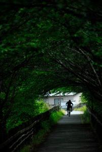 imagehearts_photomural2019 緑のトンネル